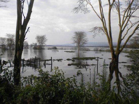Lake Naivasha Country Club-Sun Africa Hotels: View over Lake Naivasha.