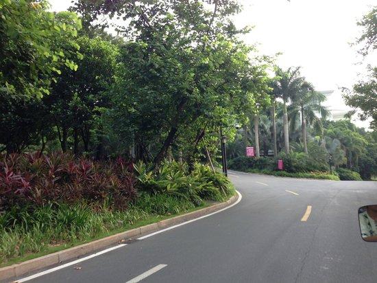 """Goodview Hotel Tangxia: La """"foresta"""" interna alla struttura"""