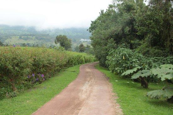 Poas Volcano Lodge: Driveway to peace