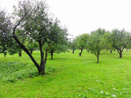 Tula, روسيا: Яблоневый сад