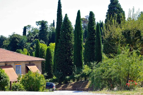 Just in Tuscany  Day Tours: majestic cypress trees