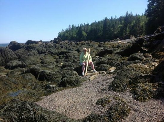 Jasper Beach : Walking stick was helpful seaweed everywhere low tide