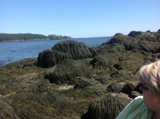 Jasper Beach : Sea of Seaweed
