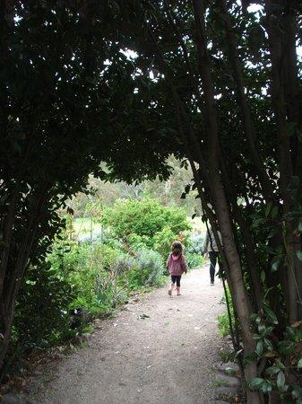 Collingwood Children's Farm: Thru the arch and into the secret garden?