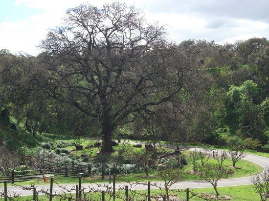 Collingwood Children's Farm: A magic tree?