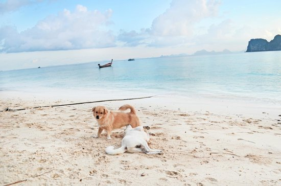 Koh Ngai Thanya Beach Resort: The resort's dogs are so cute and friendly, especially the puppy.