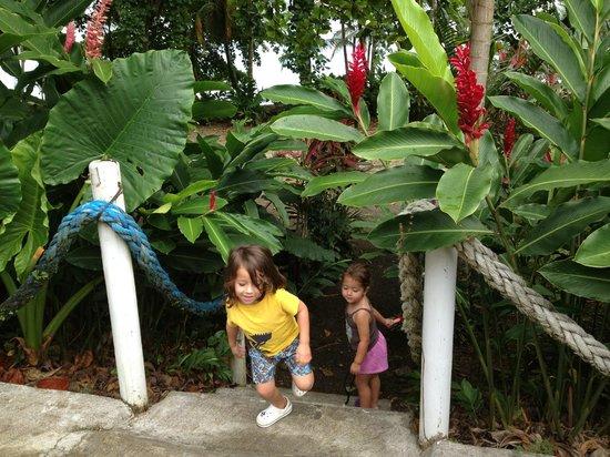Villas del Caribe: Jardin