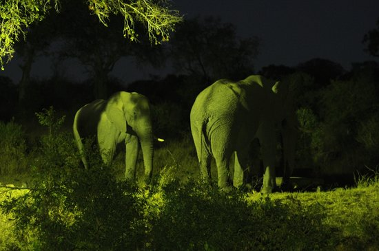Imbali Safari Lodge: Elephants at Night across the river at the Waterhole