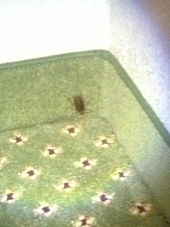 Howard Johnson Hattiesburg : Cockroach on the wall in my room.
