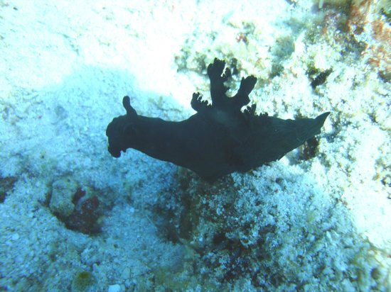 Philippine Fun Divers, Inc.: Balicasag