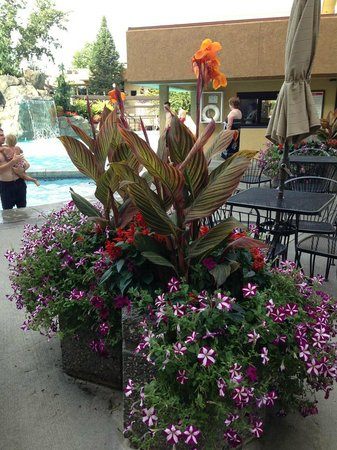 Hotel RL by Red Lion Spokane at the Park: Beautiful flowers gave it an Hawaiian feel