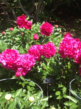 Leif Erickson Park & Rose Garden: flowers