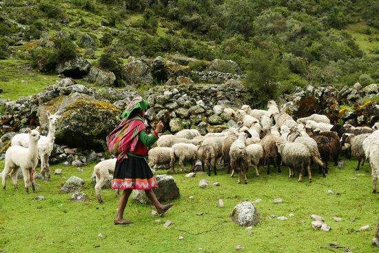 Llama Pack - Day Tours: Llama trek