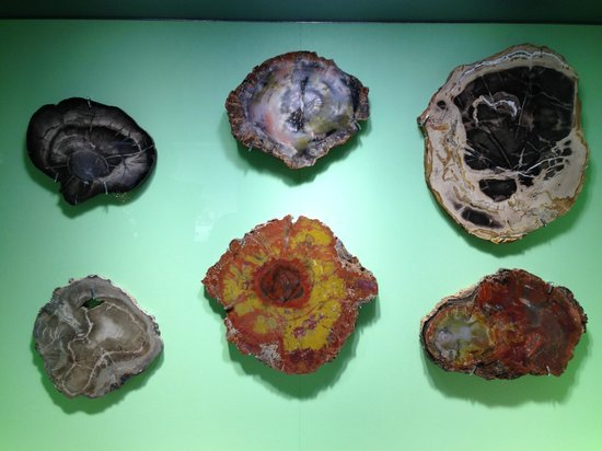 Glenbow Museum: Glenbow 1 - Fossilized tree sections