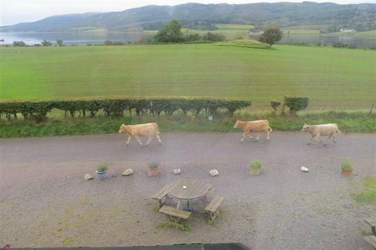 Colintraive Hotel: Rush hour at Colintraive!