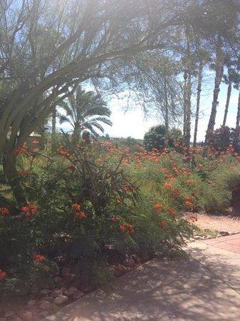 Westward Look Wyndham Grand Resort and Spa: Jardines dentro de la propiedad
