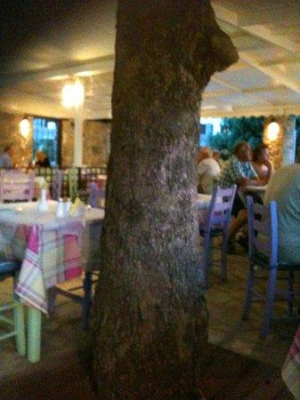 Ratatouille Restaurant: Find the tree