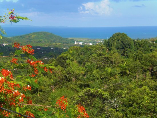 Ceiba Country Inn : View from the deck