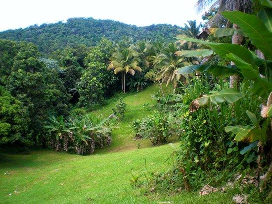 Ceiba Country Inn : The hotel grounds