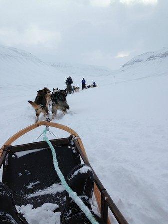 Green Dog Svalbard: på vej til isgrotten
