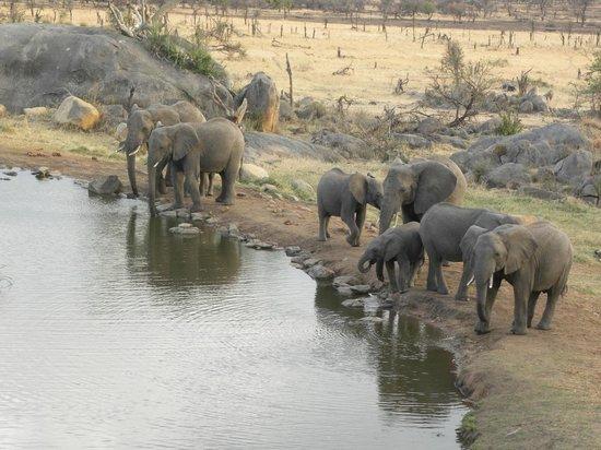 Four Seasons Safari Lodge Serengeti: View from balcony