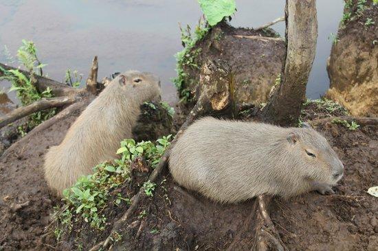 Zoorefugio Tarqui