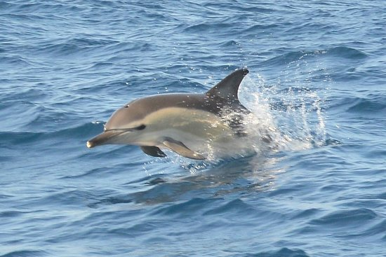 Dolphins Driven: Delfin