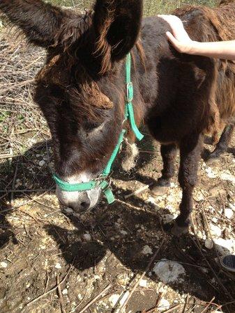 Italy Farm Stay: The donkey