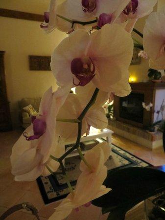 Hotel rural Arpa de Hierba: Orquídeas