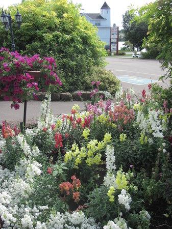 Stanley Bridge Country Resort: Flowers