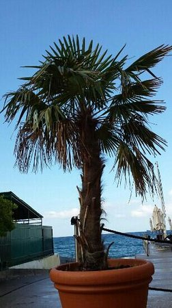Tre Merli Beach Hotel: terrazza sul mare