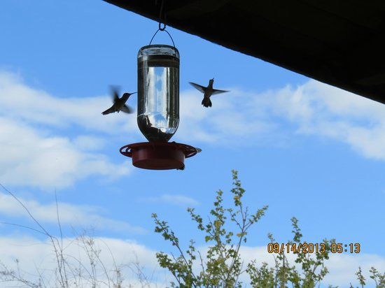 Mountain Trails Lodge: Hummingbird feeders abound