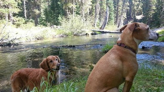 Shelter Cove Resort & Marina: Dogs on Trapper Creek hike