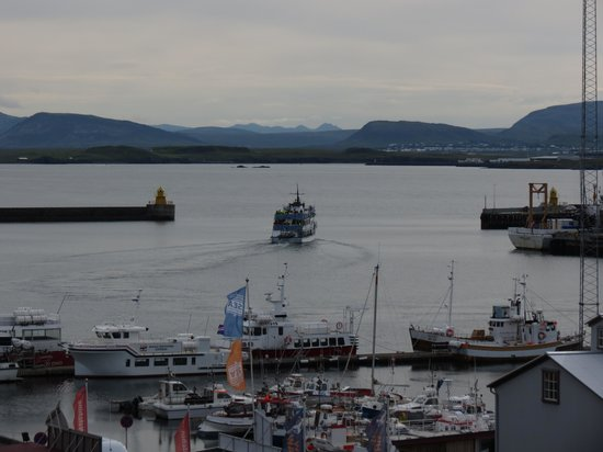Icelandair Hotel Reykjavik Marina: partenza per avvistamento balene