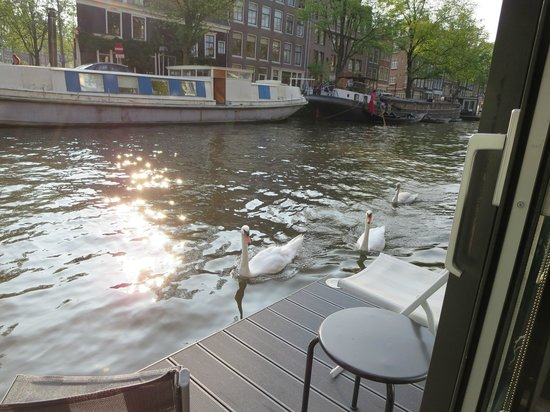 The Guest-Houseboat: Swans came by to visit