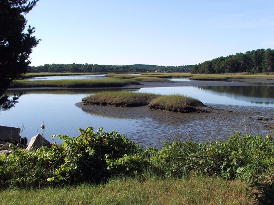 Lobsta Land : ADDITIONAL VIEW OF SALT MARSH