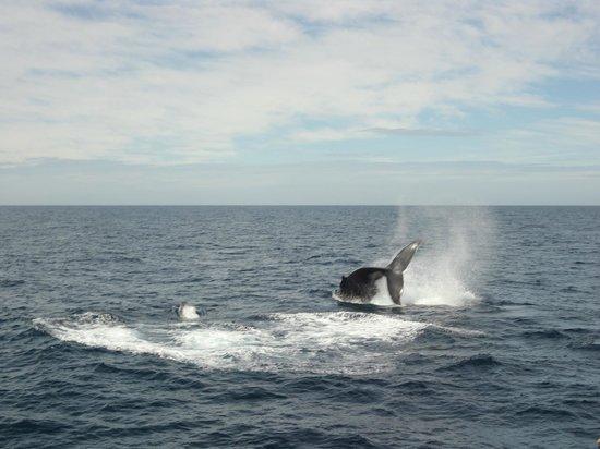 Sea World Whale Watch: Whale 2 10 Sept 2013