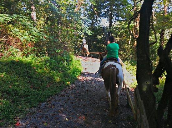 Big Rock Dude Ranch at Ponderosa : Along the trail