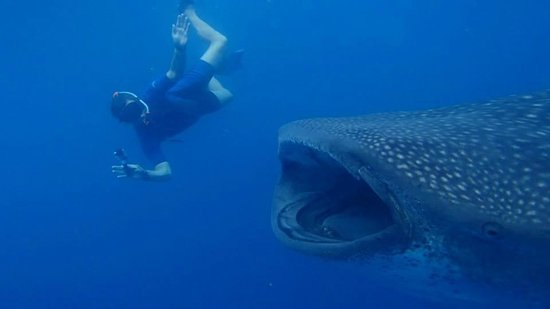 Cancun Whale Shark Tours: Hubby getting up close and personal