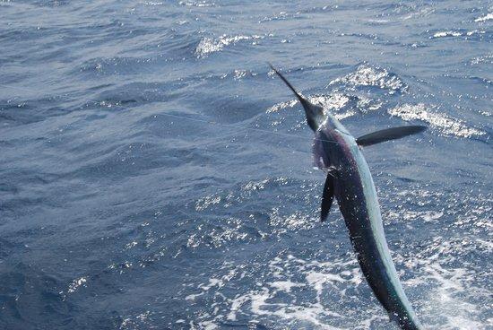 Fin Seeker Sportfishing