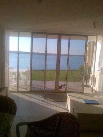 Noosa Harbour Resort : Ground floor one bedroom apartment (duckies at our back door!)
