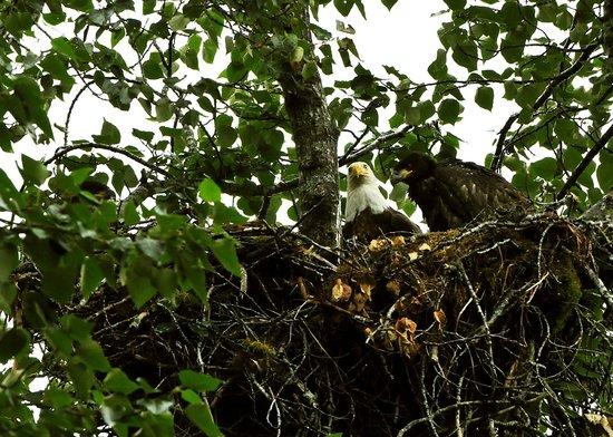 Kodiak Island Van Tours: Adult and two fledglings