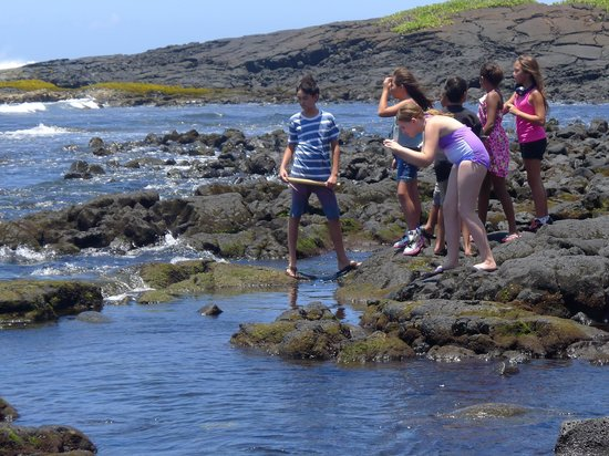 Wyndham Kona Hawaiian Resort: Black Sands Beach where you can usually find sea turtles