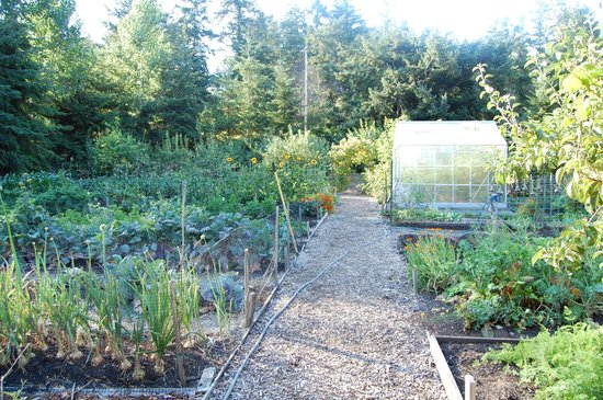 Pebble Cove Farm : garden
