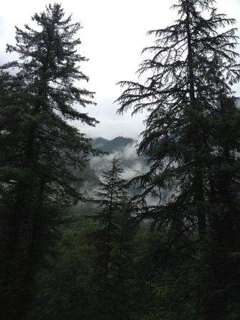 Kasol, India: Crush smokey forest... Purple sky all over you! Kasaul!