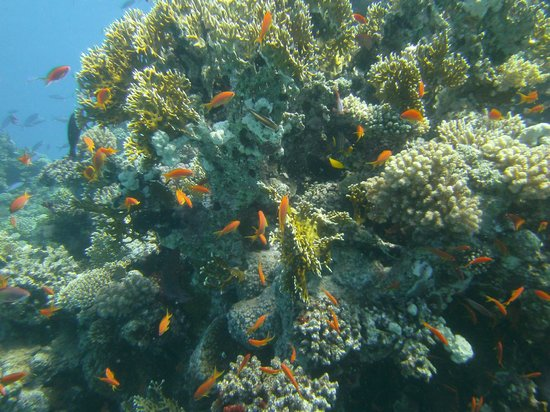 Emperor Divers Hurghada - Day Tours: Local reef