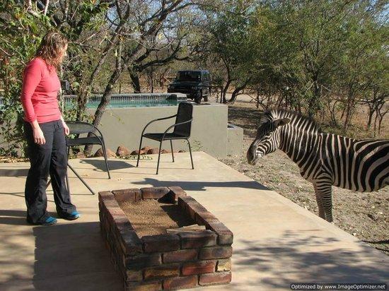 regular visitors at Turaco Lodge