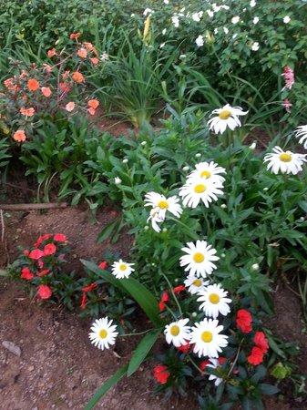 Ceylon Tea Trails : Lovely flowers in garden