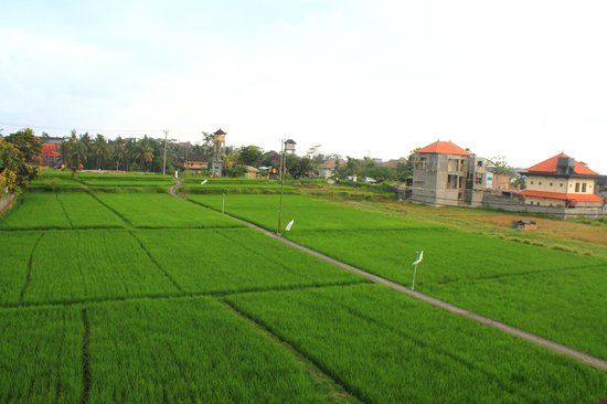 Nick's Hidden Cottages: The paddy field outside of the hotel
