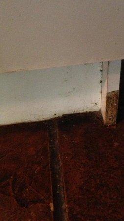 Kondalilla Eco Resort: Tacky , cheap and dirty kitchen cupboard .